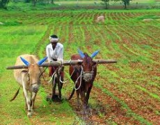 How can ICTs help with revitalising India's agriculture sector?