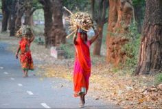"""Does she plough the field?"" Discussing the gender pay gap in Indian informal economies"